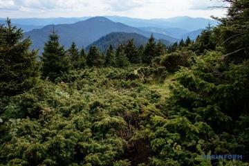 Parlament zakazał wyrębu drzew na stokach Karpat