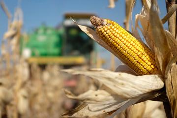 Ucrania espera que EE.UU. abra mercado para maíz y trigo ucranianos
