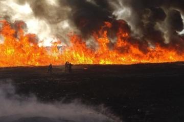 In Oblast Kyjiw Sojaernte auf Fläche von 30 ha ausgebrannt