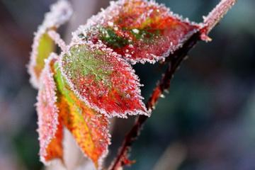 Météo: De fortes gelées sont attendues partout en Ukraine
