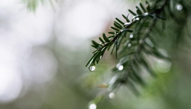 Синоптики на сегодня обещают до +19°, местами дождь