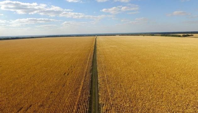 Під Полтавою згоріло понад 20 гектарів кукурудзи