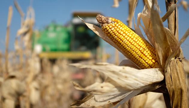 Кукурудзу збирають вже у 15 областях