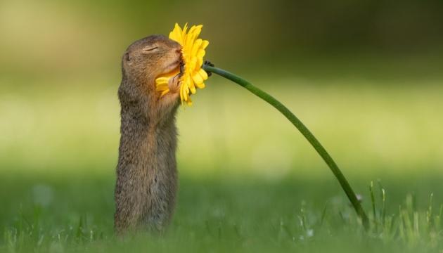 Фото ховраха з квіткою зробило голландця відомим на весь світ