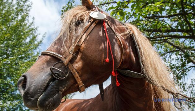 У Житомирі влаштують свято з українським конем