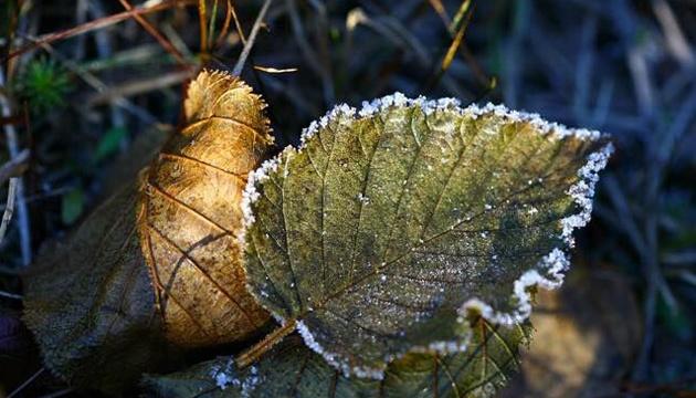 Початок листопада принесе нічні приморозки та трохи дощу