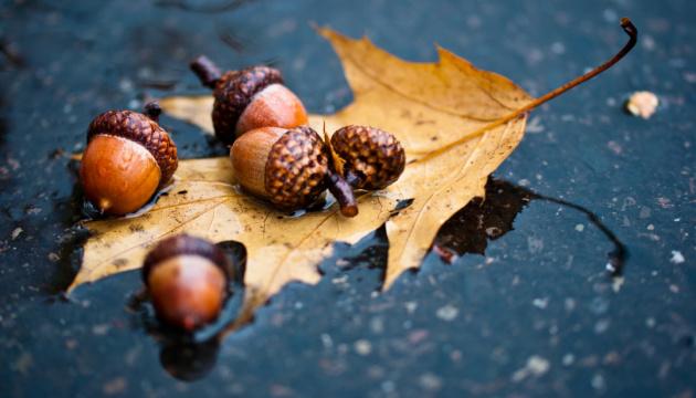Примхлива осінь: на сході заморозки, на півдні до +23°