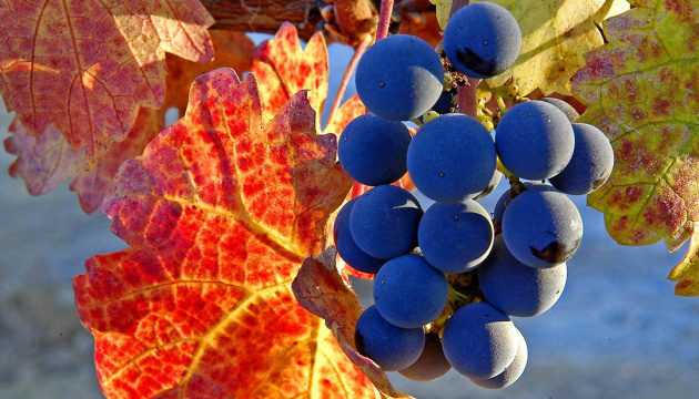 Economy Ministry represents concept for winegrowing development until 2030