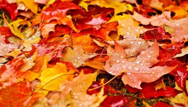 М'який жовтень та сніг у листопаді: прогноз погоди на осінь-2019