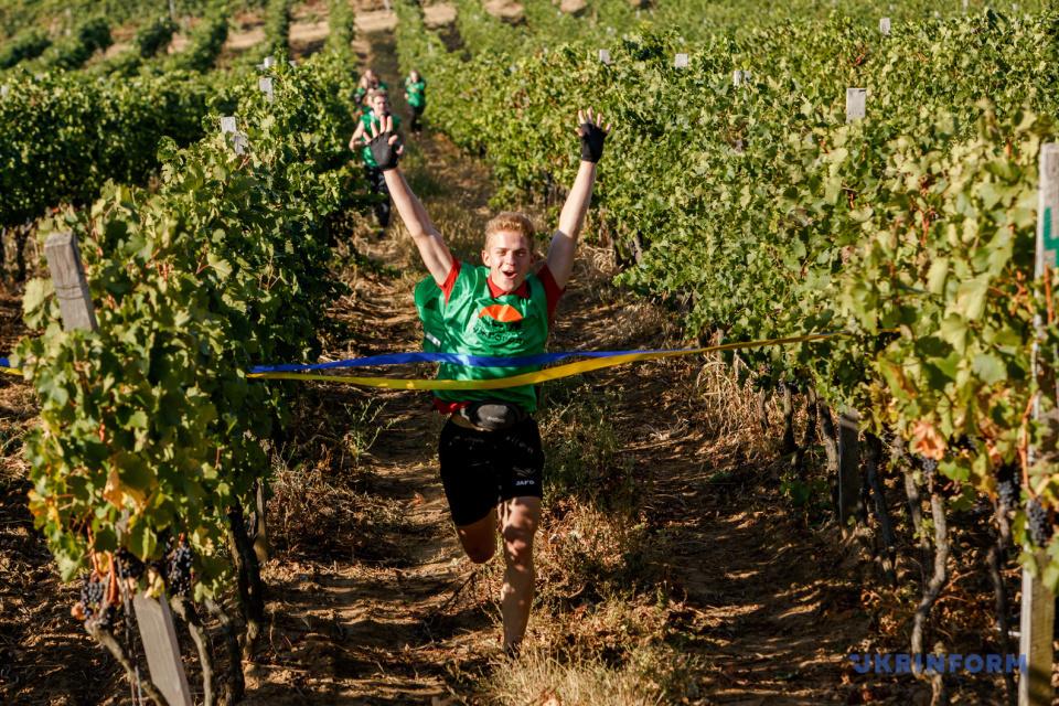 Maratón por viñedas en Transcarpatia/ Foto: Sergiy Gudak, Ukrinform