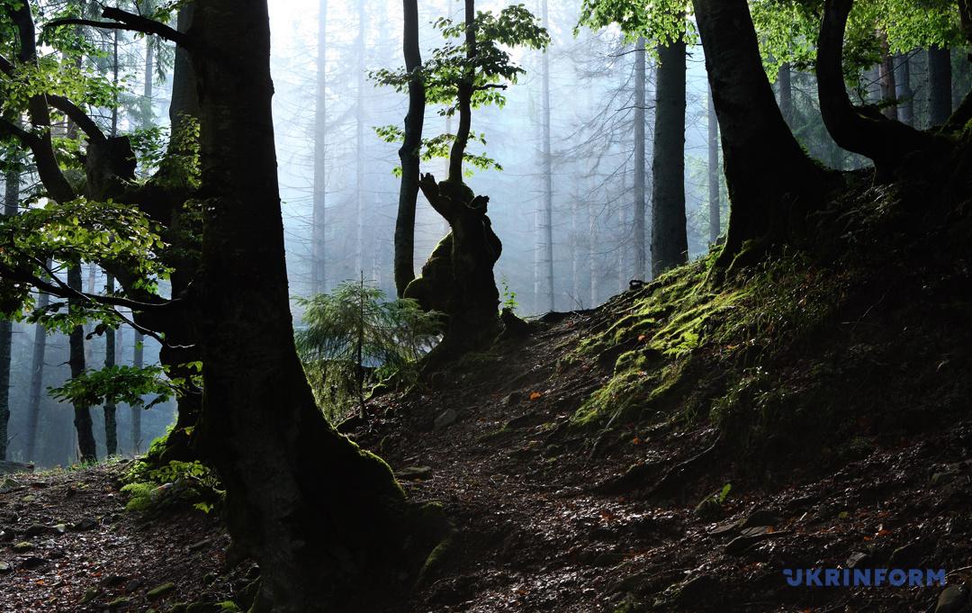 Туристичний Синевир: Зелений мед, гори сміття та надія на розвиток (ФОТОРЕПОРТАЖ), фото-19