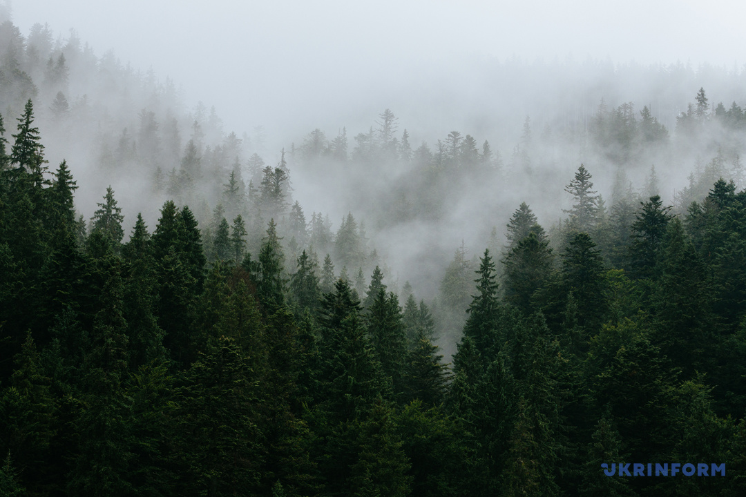 Туристичний Синевир: Зелений мед, гори сміття та надія на розвиток (ФОТОРЕПОРТАЖ), фото-14