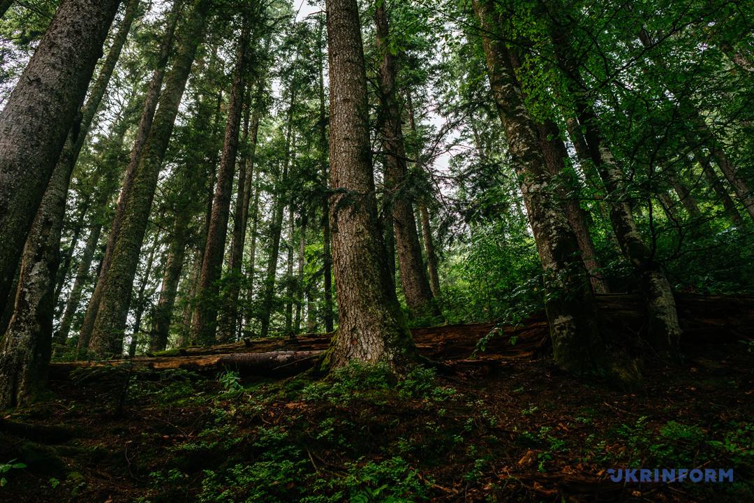 Туристичний Синевир: Зелений мед, гори сміття та надія на розвиток (ФОТОРЕПОРТАЖ), фото-15