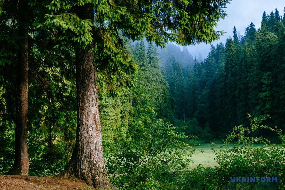 Туристичний Синевир: Зелений мед, гори сміття та надія на розвиток (ФОТОРЕПОРТАЖ), фото-18