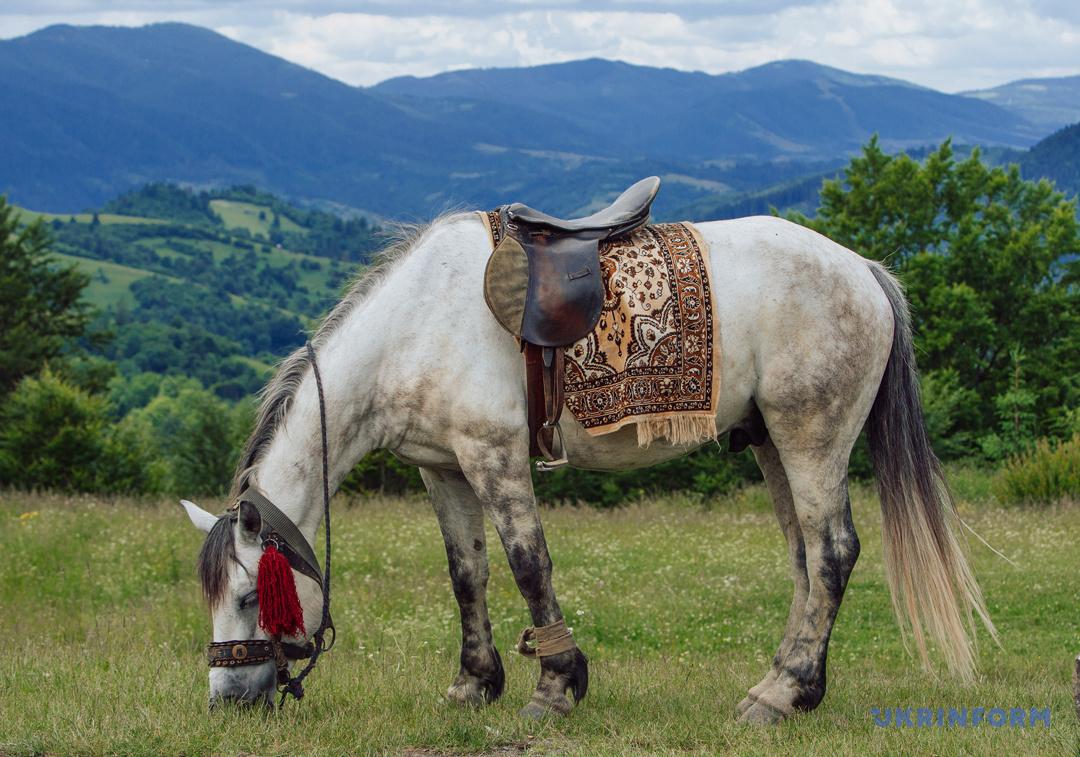 Туристичний Синевир: Зелений мед, гори сміття та надія на розвиток (ФОТОРЕПОРТАЖ), фото-20