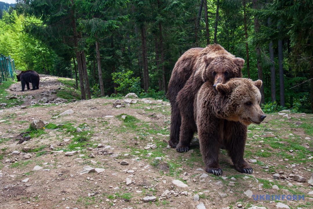 Туристичний Синевир: Зелений мед, гори сміття та надія на розвиток (ФОТОРЕПОРТАЖ), фото-8