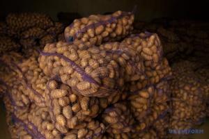 Украина побила рекорд по импорту картофеля