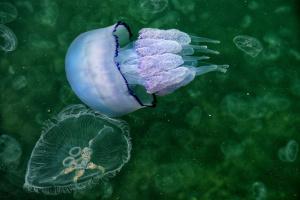 Медузы освободили пляжи Арабатской Стрелки
