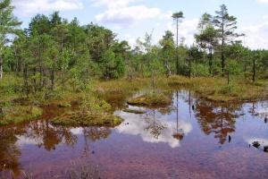 На болоте Ширковец обустроят смотровые башни для туристов
