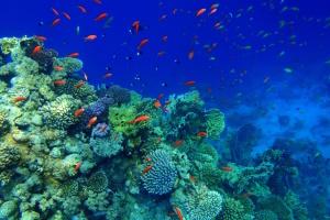 Туристам в Єгипті заборонять годувати риб