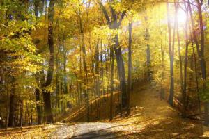 20 жовтня: народний календар і астровісник