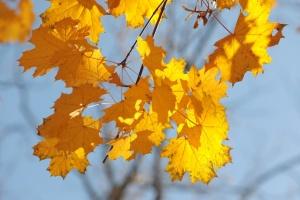 Українцям обіцяють ще п'ять днів тепла і сонця
