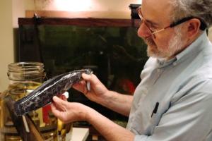 У США розплодилися небезпечні риби-змієголови з Росії та Китаю
