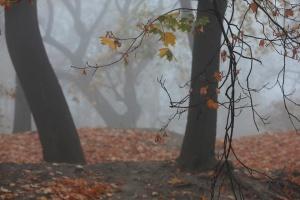 В Україні вранішній туман, вдень прогріє до 13° тепла
