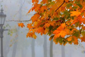 Украинцам обещают понедельник без дождей, но с туманами