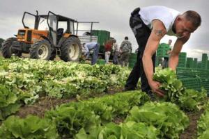 El gobierno ucraniano asigna casi 3 mil millones de UAH para apoyar a los agricultores