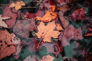 Ласковый ноябрь: украинцам обещают до +18°