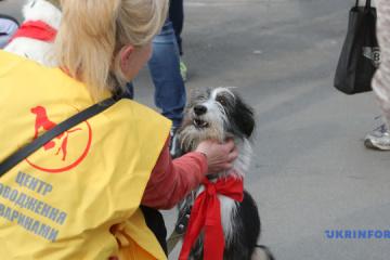 Campagne «L'Heure de la bonté»: à Kharkiv, à la recherche d'une maison pour les chiens d'un refuge