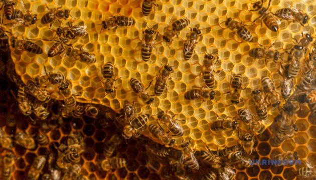 У Карпатах створять п'ять медових маршрутів для туристів