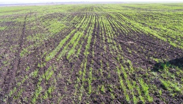 Засуха в Україні вразила близько 50% посівів озимих - експерти