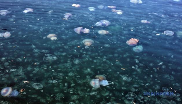 Усе, чого ви не знали про медуз