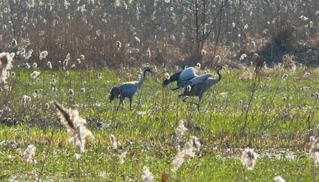Чортове болото й квести: Цумань розробляє туристичний маршрут