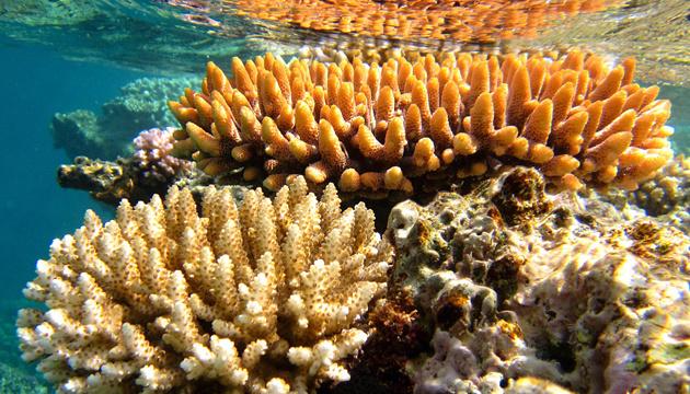 До 90% коралловых рифов исчезнут в течение следующих 20 лет
