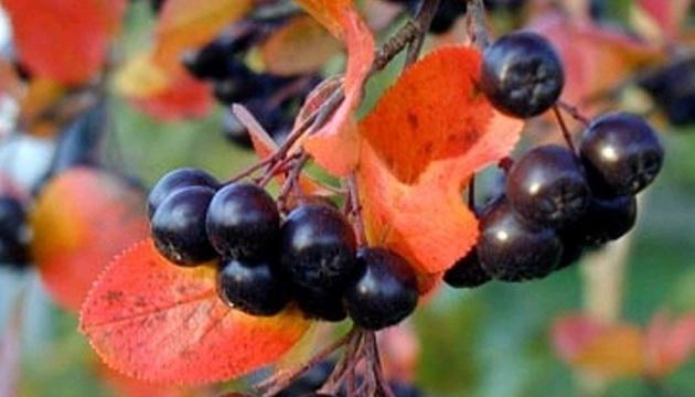 12 жовтня: народний календар і астровісник