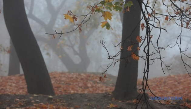 Украину накрыл туман