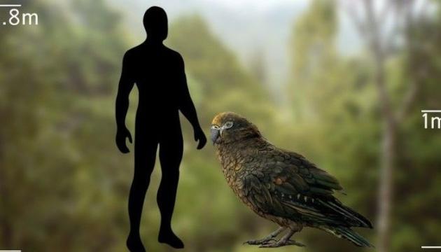 У Новій Зеландії знайшли скам'янілі рештки гігантського папуги