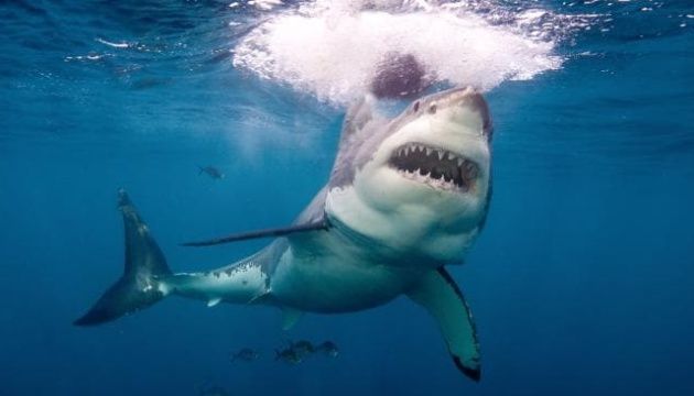 В Австралии акула тяжело ранила двух туристов