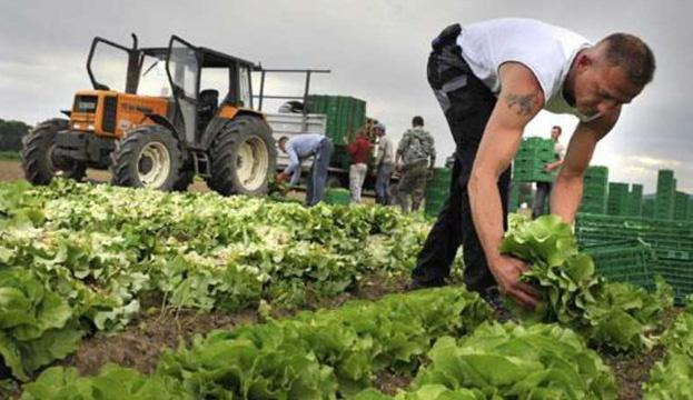 Рентабельність у фермерів вища, ніж у сільгосппідприємствах - експерти