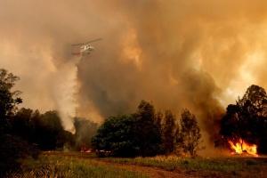 Пожежі в Австралії: Сідней у диму, ліс горить на території в 150 тисяч гектарів