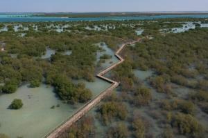 Абу-Дабі покличе туристів у ліс на воді