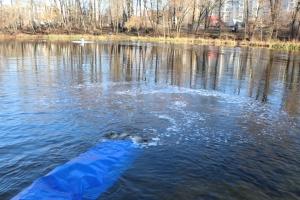 У Сумах у річку Псел випустили понад тонну коропів