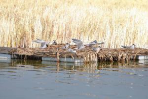 На Бурштинському водосховищі збудують штучний острів для птахів