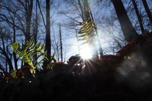 Три нові лісові заказники з'явилися на Львівщині