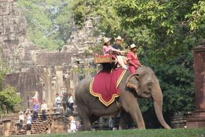 В Камбодже туристам запретили кататься на слонах