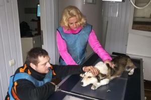 Пострадавшую от издевательств хмельницкую собаку приютила полиция