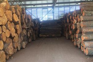 Exportaciones ilegales de madera robada en la región de los Cárpatos causa daños al Estado por UAH 2 millones